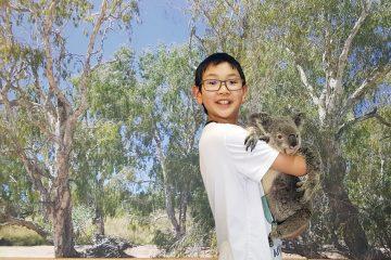 Koala at Kuranda Koala Gardens
